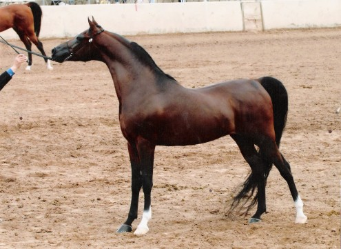 real horses 003